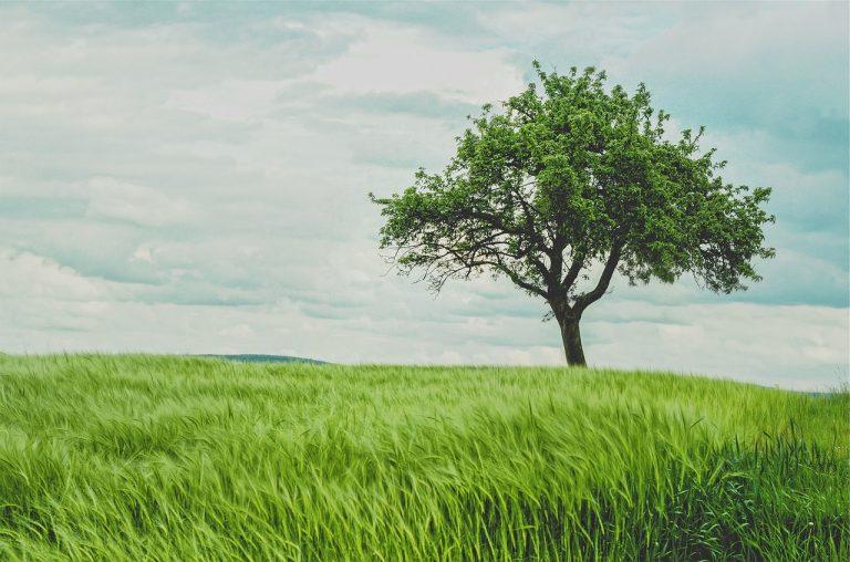 Invester i grøn opvarmning